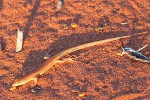 sunset_lizard