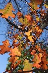 autumn_branches