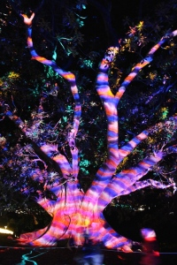 psychedelic_tree
