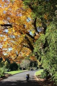 golden_winter_leaves