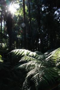 rainforest_sunlight